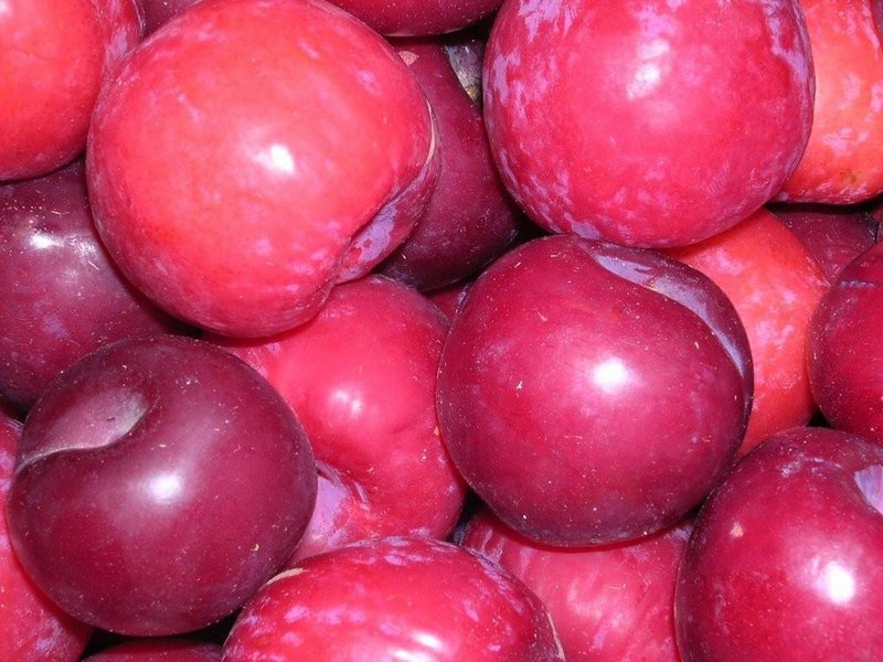 Plum Or Prune World Crops Database