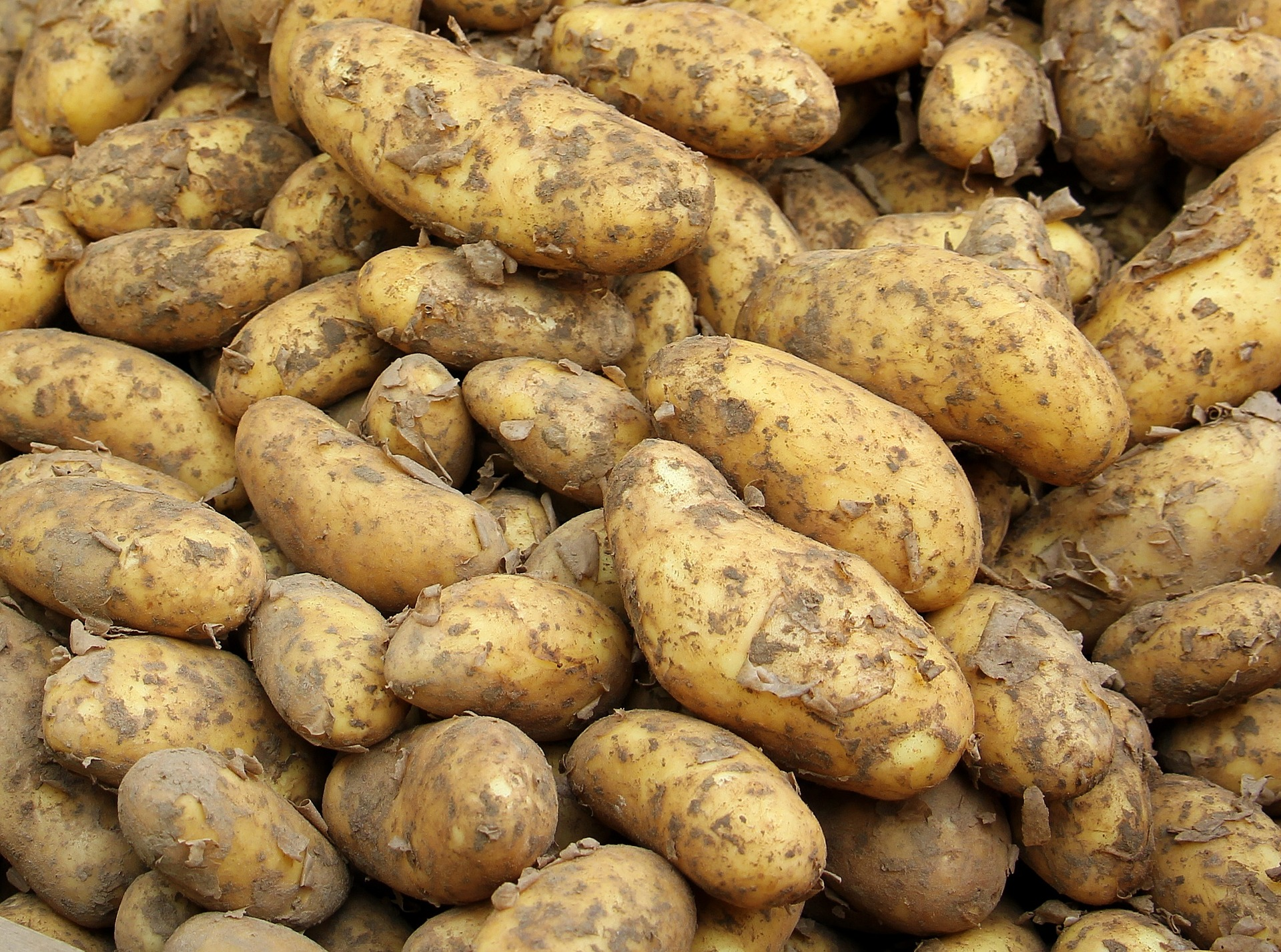 Tuber vegetables - World Crops Database